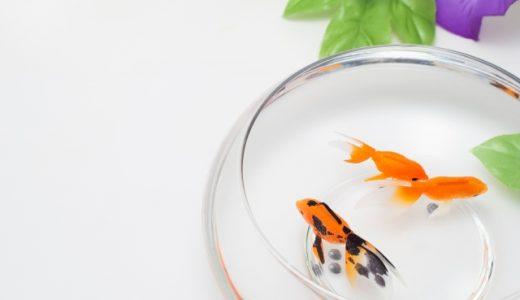 金魚鉢の法則